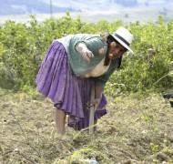 Mejora de las condiciones de salud y alimentación mediante la dotación de sistemas de agua potable en 4 comunidades indígenas del municipio Colomi, Cochabamba